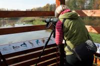 Pozorovatelna na Třemešském rybníku
