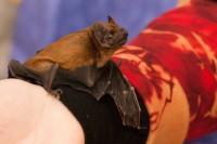 Ukázka handicapovaného netopýra v lomu na Chlumu